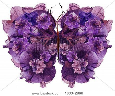 Floral Butterfly Made Dried Lily Petals Pressed Petunia Flower