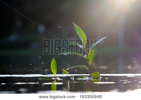 Green plants in the water. A small young shoot of a large and strong plant. The sun's rays