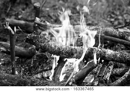 The fire which ignited in the forest. Black and white image of fire in nature. Kindled a fire using dry twigs sticks and firewood.