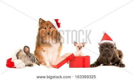 Group of pets two dogs cat and a rabbit with christmas hats on a white background