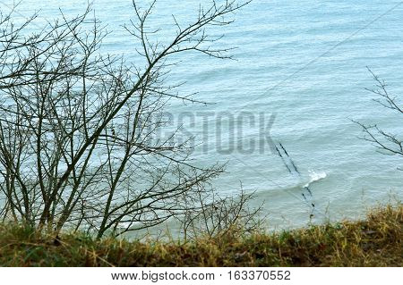 sea wave coast of the Baltic sea blue sea waves beat on the rocks the branches of the trees