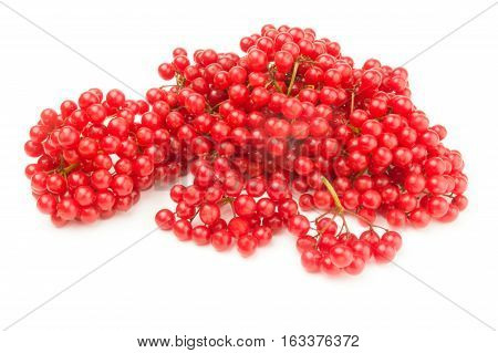 Bunches of red viburnum isolated on a white background with clipping path