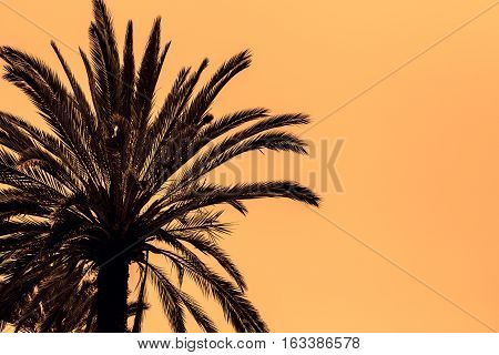 Dark silhouettes of date palms against bright colorful sky