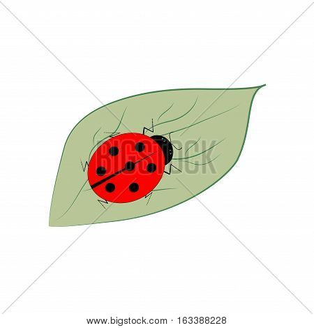 Ladybird isolated on leaf. Illustration ladybug on white background. Cute colorful sign red insect symbol spring summer garden. Template for t shirt apparel card poster Design element Vector illustration
