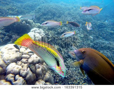 Underwater landscape with colorful fishes wrasse. Aquarium in wild nature. Seaside life scenery. Round coral shapes. Ocean ecosystem. Coral reef with animal. Tropical sea landscape. Seabed view