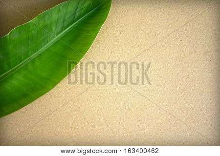 Craft paper background with green leaf and vignette. Natural backdrop. Beige paper sheet mockup for drawing sketching lettering. Exotic garden elements in flat lay composition with place for text