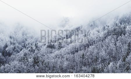 Snow forest tree background nature scenic landscape stock photo