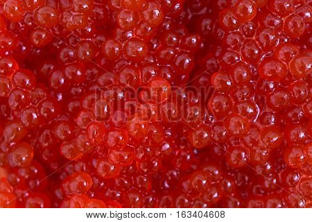 Red caviar close-up background. Background made of red caviar