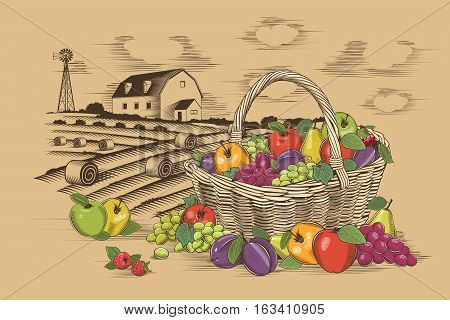 Fruit basket in woodcut style, vector illustration.