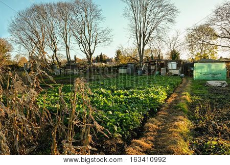 Allotment which is a small plot of land you can rent and use to grow your own vegetables.