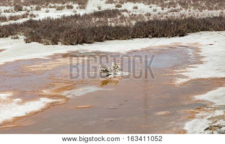 Shot taken at Lady's Mile Limassol Cyprus of the salt lake and shows a lump of wood covered in salt deposit in the middle of the lake.