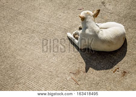 Gazing dog is resting on concrete ground.