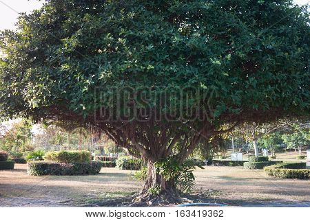 Big tree in green field, stock photo