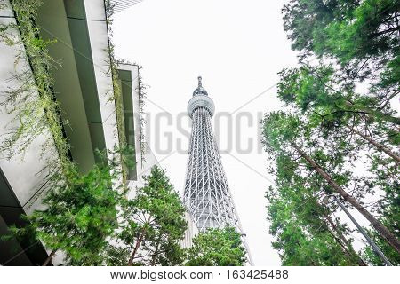 Tokyo Japan - Oct 13 : Business concept for real estate and corporate construction : Looking up view of Tokyo Skytree(sky tree) the landmark of Japan with white background at Oct 13