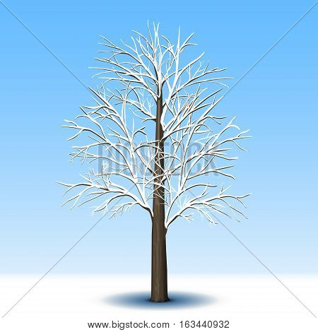 detached tree without leaves in frost with shadow