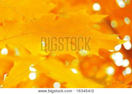 yellow leafs background close up