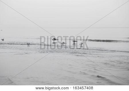 Beautiful little Seagull on promenade walk in the distant