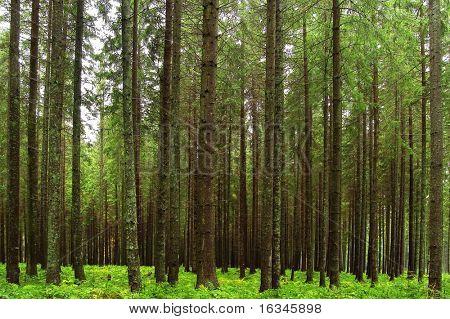Сказка РПИ дерево лес