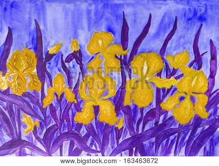 Hand painted picture watercolours flower bed with many yellow irises on bluebackground.