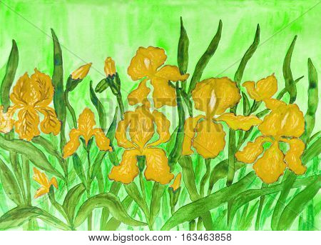 Hand painted picture watercolours flower bed with many yellow irises on greenbackground.