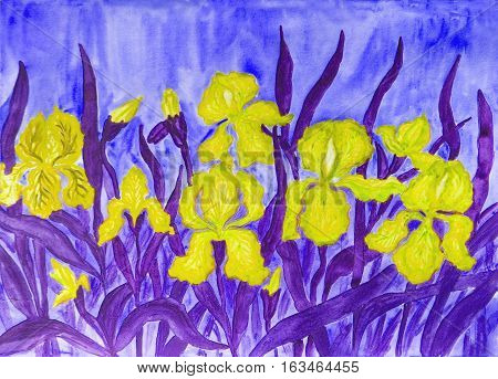 Hand painted picture watercolours flower bed with many yellow irises on blue background.