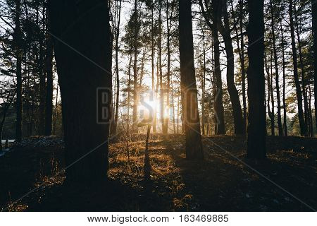 Sporty woman doing yoga breathing exercises with her hands together and her eyes closed in a serene forest at sunset. Healthy lifestyle concept.