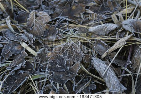 Closeup of frozen Ground. Frozen. Nature in the Wintertime