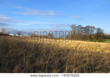 Dry Grasses In Winter