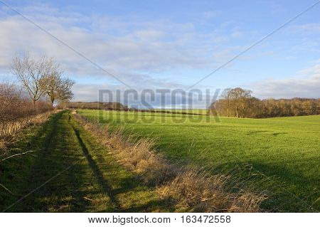 Bridleway And Wheat