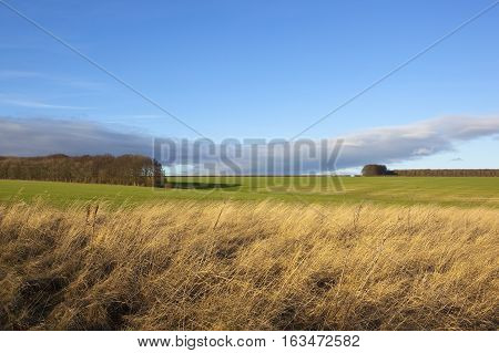 Dry Grasses With Wheat Fields