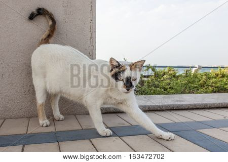 Homeless cat living at the corniche in the city of Abu Dhabi United Arab Emirates