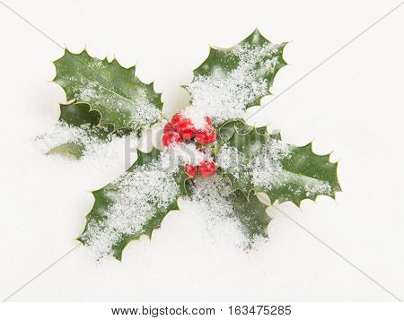 Holly ilex christmas decoration with red berry's covered with snow on a white background