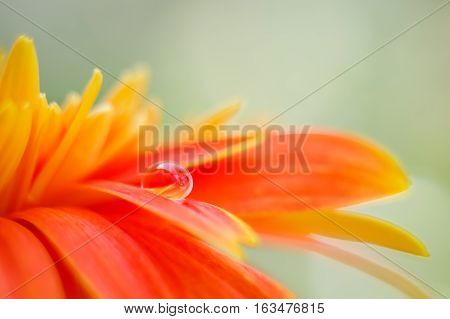 Orange daisy colors in water drops with bright background