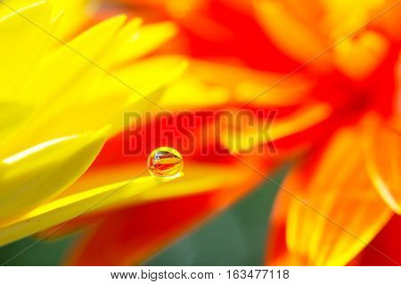 Yellow daisy colors in water drops with orange background