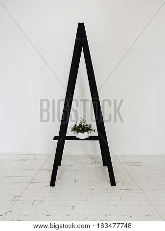 Black wooden stepladder in interior Green decorative bouquet in the box standing on black stepladder in white room with wooden floor