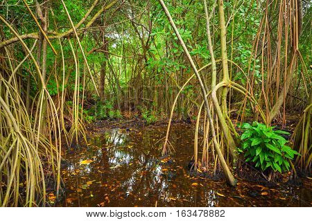 Mangrove Trees Growing In The Water