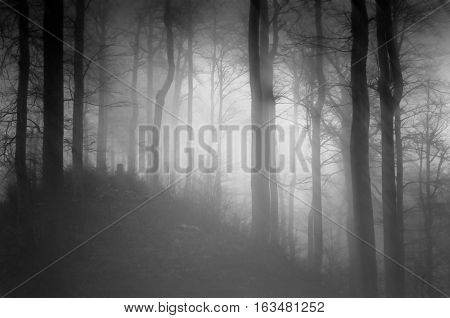 Black and white photo of a black and quite dark forest landscape