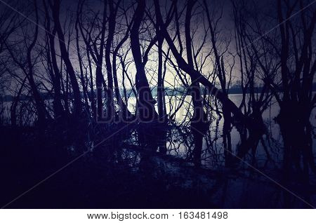 Dark and gloomy landscape with a forest by the lake. Forest background for web usage
