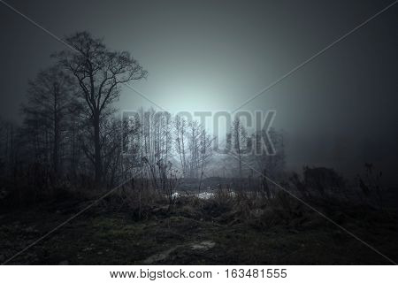 The dark trees at the forest edge. Blue dark background: forest in the mist