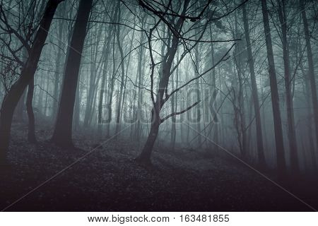 Nightmare horror forest with blue light. Black woods