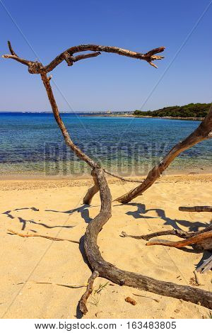 Summer holidays.coast of Salento:Porto Cesareo (Lecce),ITALY (Apulia) .In the background Porto Cesareo town seen from the Big Island (or Isola Grande) Nature Reserve.Tree branch isolated on the beach.