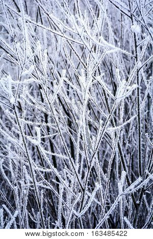 Frosty winter background with icy branches and twigs