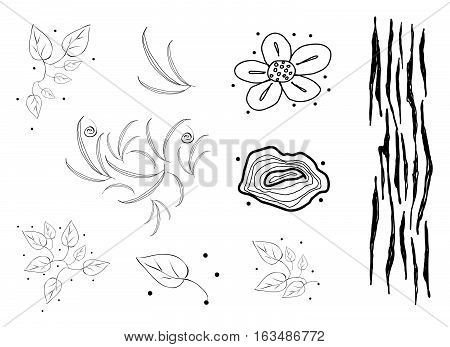 Illustration Set of Various Doodle Flowers Leaves Distressed Scratch Wood Tree Rings Triangle and Spiral Pattern.