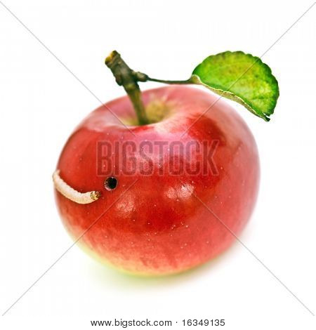 worm in apple isolated on white