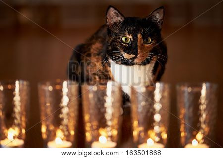 The cat with half black face, half red, sits and stares at the burning candles. Yin Yang