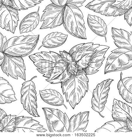 Mint leaf pattern. Peppermint leaves sketch vector background for tea wrapping paper. Organic background with natural leaf illustration