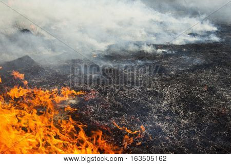 Big fire in the field. The burnt smoking grass and the grass still burning.