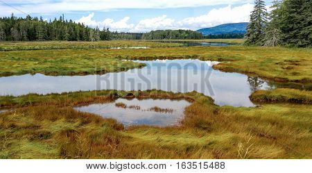 New England Marshland:  Grassy wetlands cover a portion of the shoreline on Mount Desert Island near Acadia National Park.