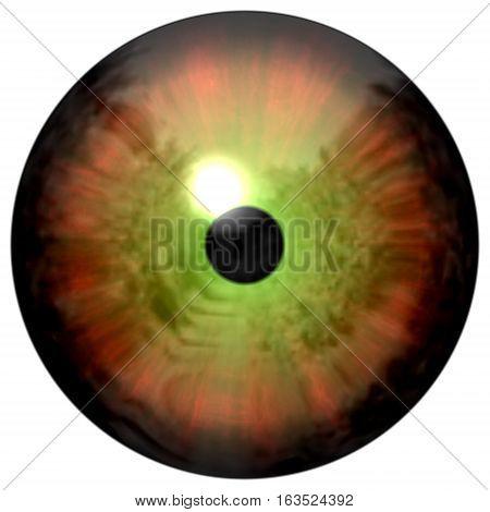 Smooth Orange Eye. Animal 3D Eye With Large Pupil And Dark Retina