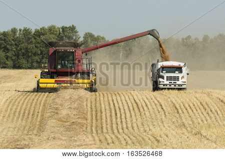 Harvesting  a wheat field in North Dakota